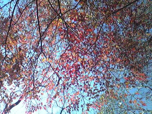 天狗高原 紅葉