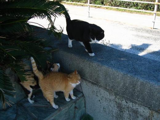 集まった猫