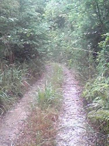 舗装されていない道