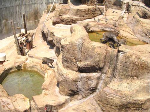 砥部動物園 サル山