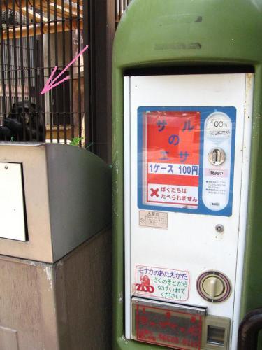 砥部動物園 猿の餌の販売機