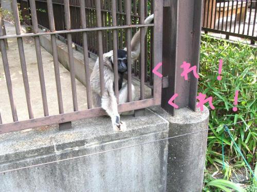 砥部動物園 餌を欲しがる猿2