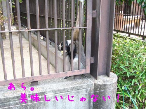 砥部動物園 餌を食べる猿2