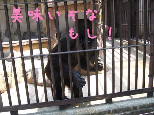 砥部動物園 餌を食べる猿
