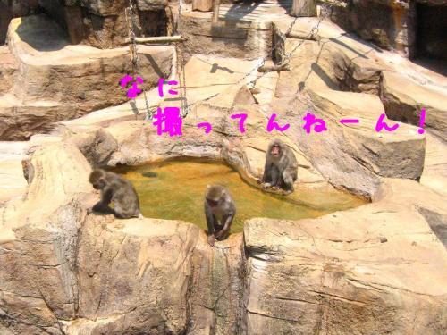 砥部動物園 サル山2