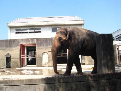 砥部動物園 象