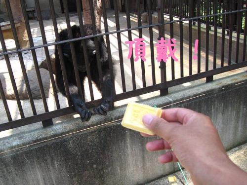 砥部動物園 餌を欲しがる猿