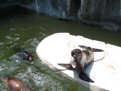 とべ動物園 アシカ