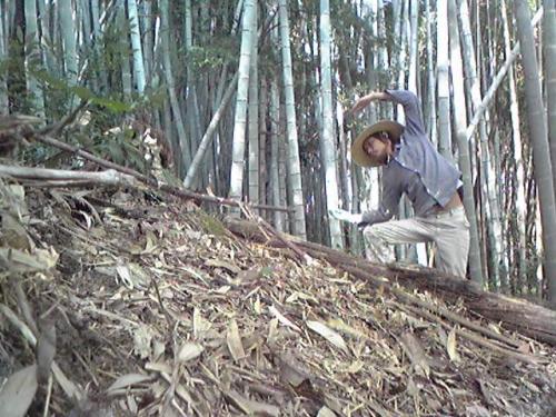 竹やぶの中で
