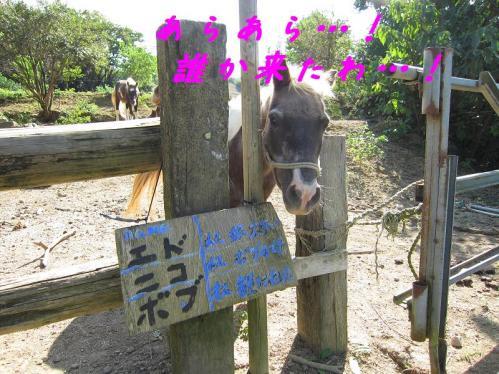 岡崎牧場 お馬さんたち