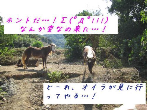 岡崎牧場 近寄ってくる馬