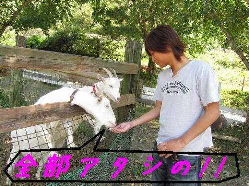 岡崎牧場 ヤギさんにエサをあげる竜一さん