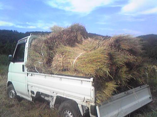 稲を刈ってダイコンが育つ頃に始まる、メインイベント