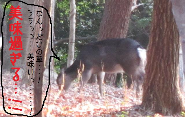 4日目!風呂!鹿!3