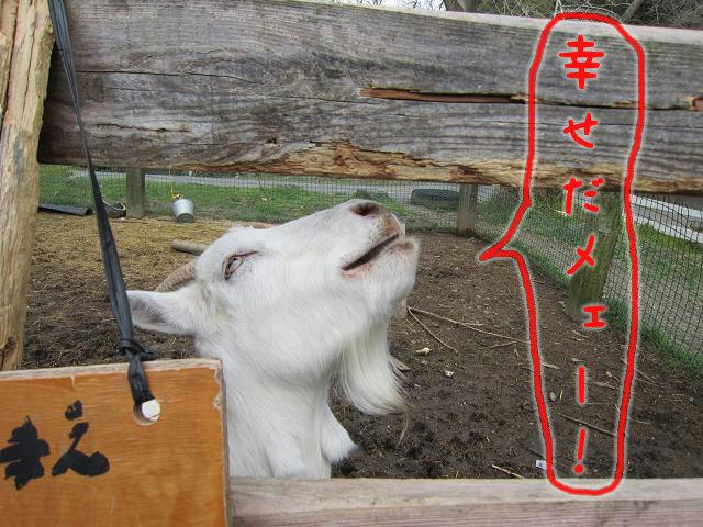 岡崎牧場 ヤギの愉悦