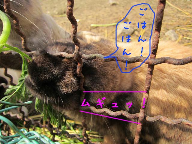 岡崎牧場 ウサギ(ちく天2)