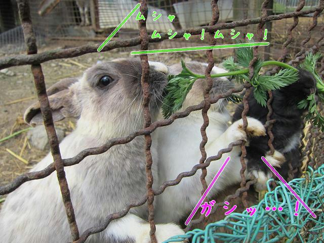 岡崎牧場 ウサギ(手が可愛い)