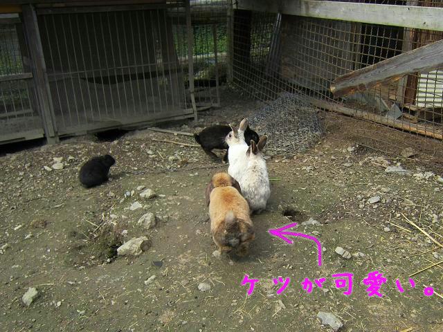 岡崎牧場 ウサギたち
