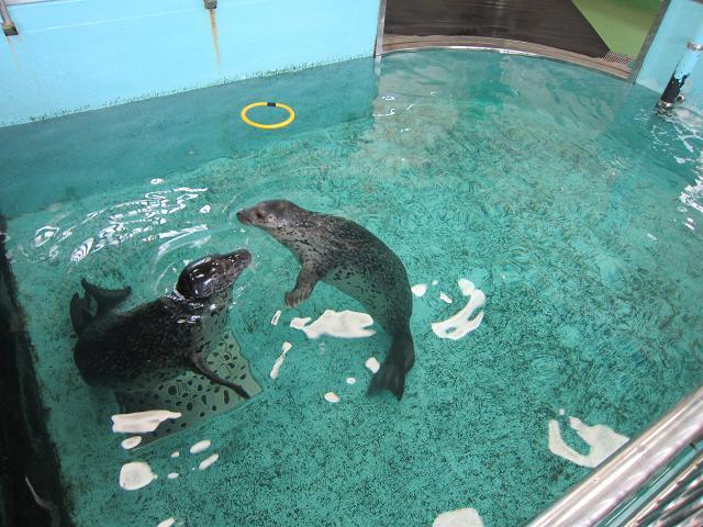 足摺海洋館 アザラシ