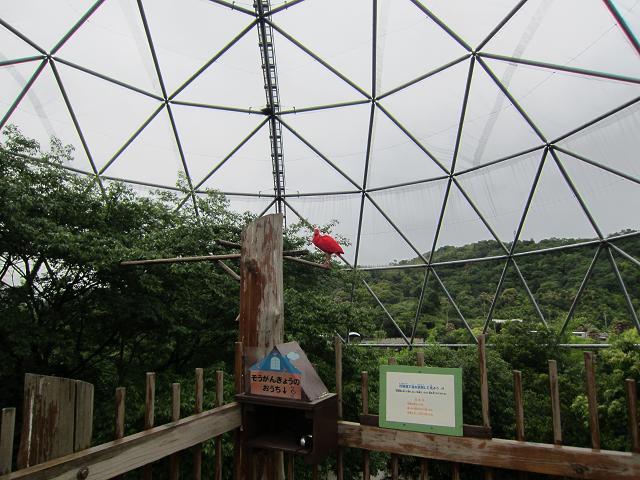 とくしま動物園 赤い鳥