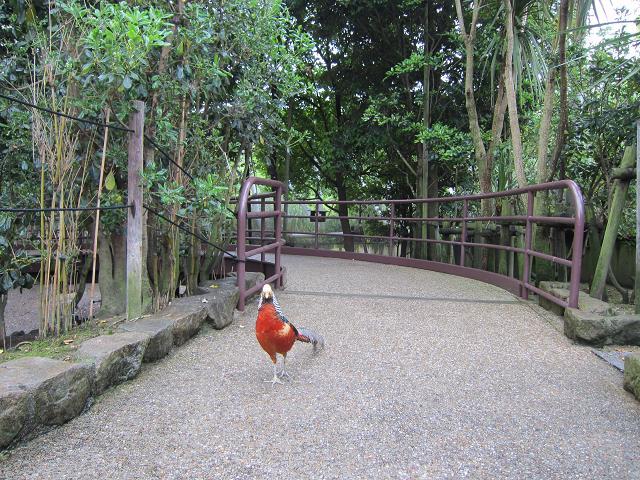 とくしま動物園 カラフル鳥