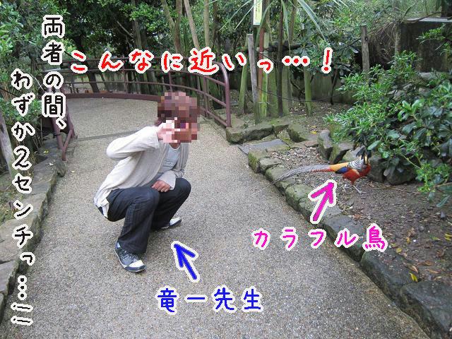 とくしま動物園 鳥と竜一先生