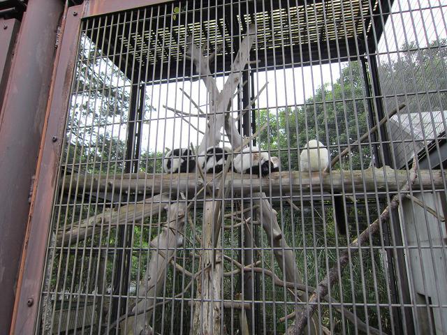 とくしま動物園 寝ているサル系の動物