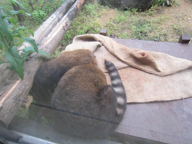 とくしま動物園 寝ているナニカ