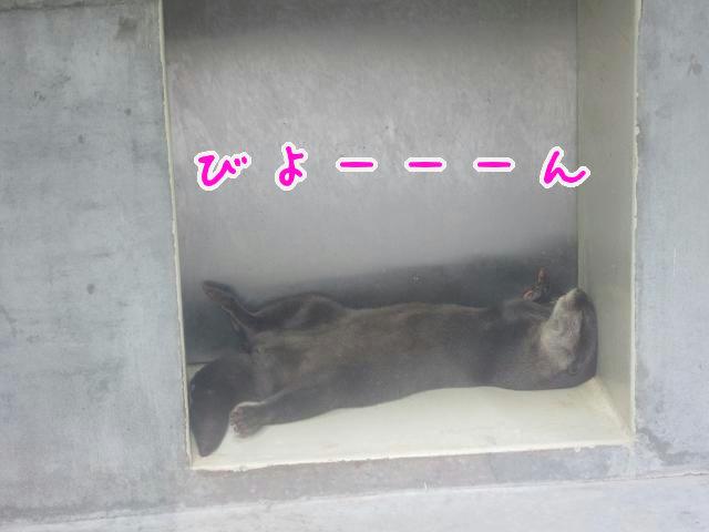 とくしま動物園 寝ているカワウソ