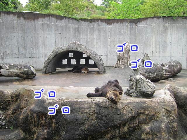 とくしま動物園 寝ている熊