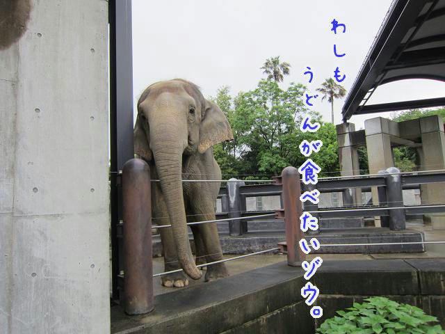 とくしま動物園 ゾウ