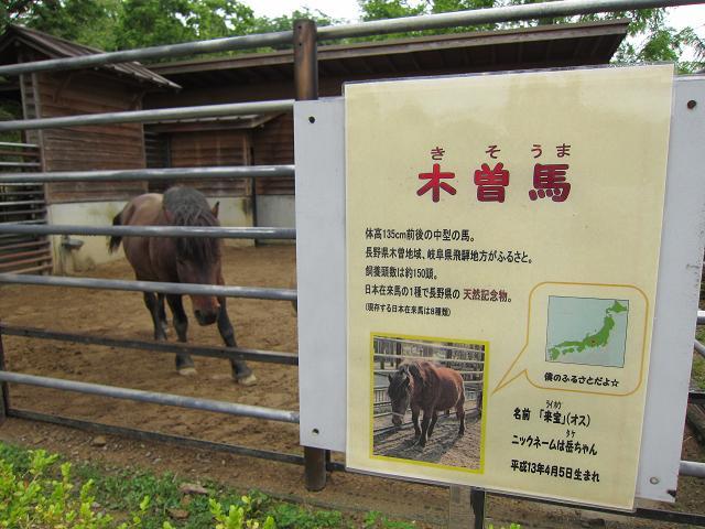とくしま動物園 木曽馬1
