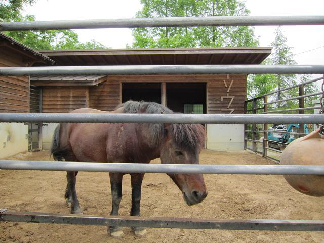 とくしま動物園 木曽馬2
