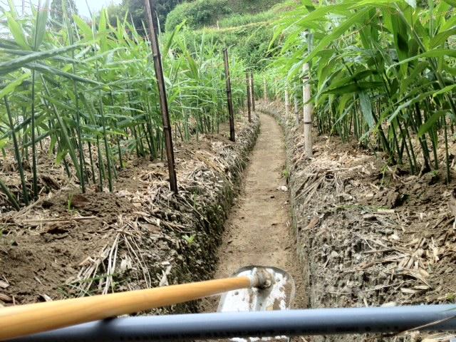 生姜畑2-1