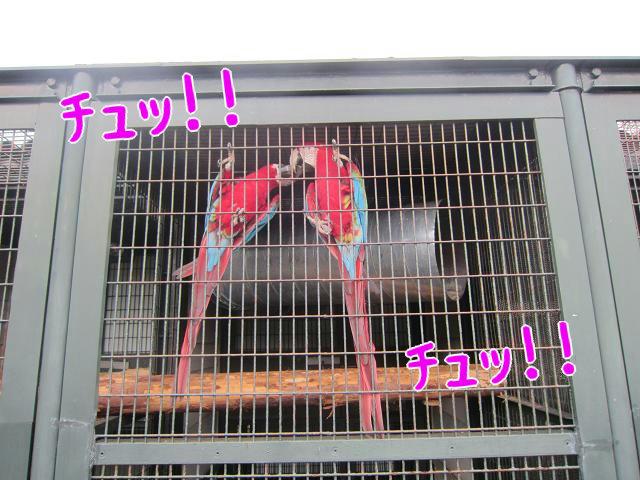 わんぱーくこうち LoveLoveな鳥