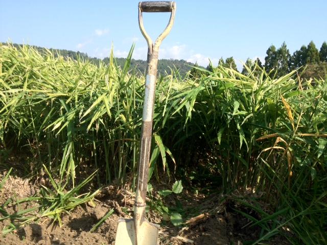 生姜農家の野望Online、夜営業開始のお知らせ