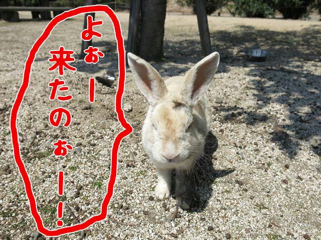 ウサギ島0013