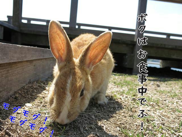 ウサギ島0015