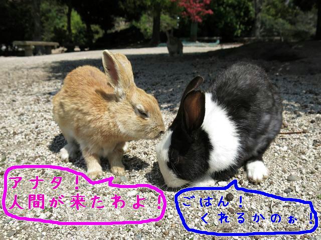 ウサギ島0017