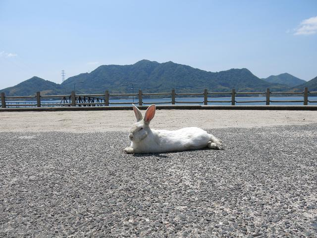 ウサギ島0018