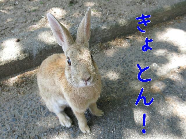 ウサギ島0019