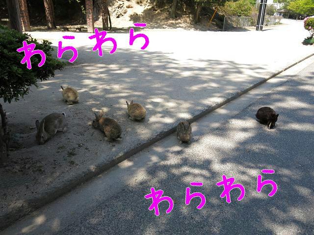 ウサギ島0020