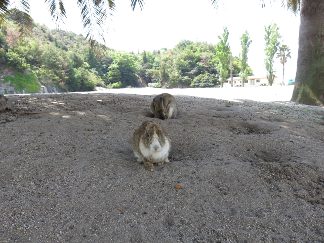 ウサギ日和 EP4 「ウサギ島で、ウサギまみれ」