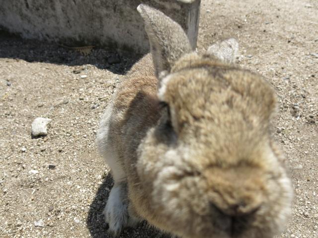 ウサギ島0028