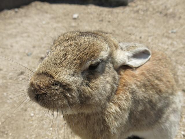 ウサギ島0031