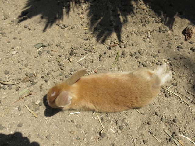 ウサギ島0033