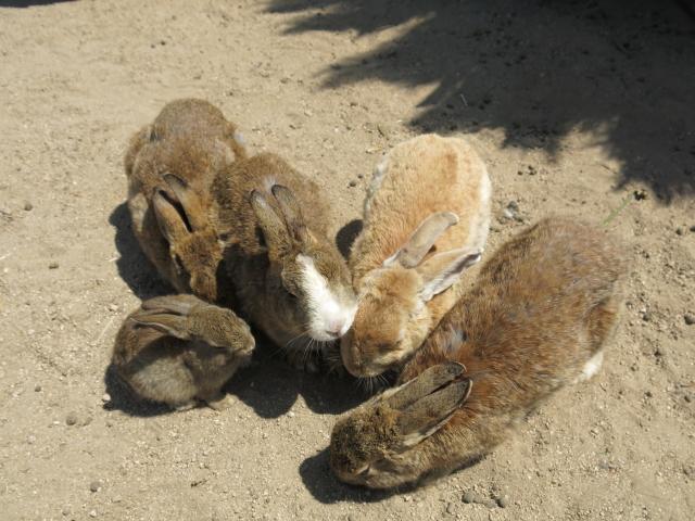 ウサギ島0034