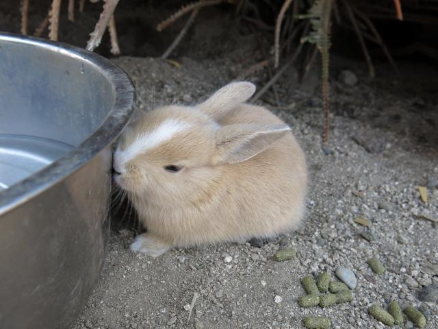ウサギ島0035