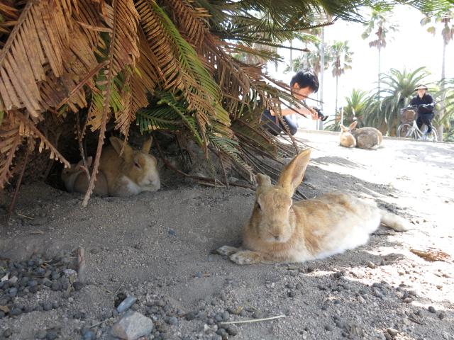 ウサギ島0038