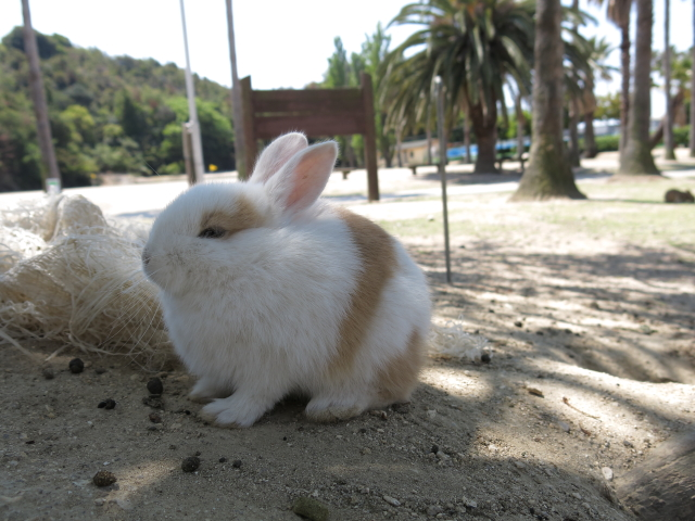 ウサギ島0039
